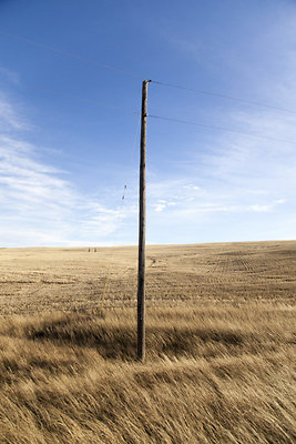 pole in wheat